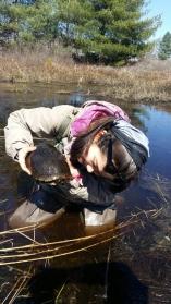 Jen checks a Blanding's turtle for ecto-parasites